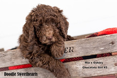Hershey - Doodle Sweethearts photo - 03 (JD and Beastlet) Tags: