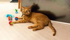 IMG_4124 (jaglazier) Tags: 2018 51018 animals birthdays bloomington cats indiana kittens mammals may parties toys usa copyright2018jamesaglazier interiors tiger unitedstates