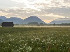 P5120009 (turbok) Tags: blumenwiese landschaft rosswiese wiesen c kurt krimberger