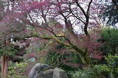Red Tree (Bri_J) Tags: biddulphgrangegardens nationaltrust biddulph staffordshire uk gardens statelyhome nikon d7200 red tree