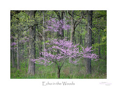Echo in the Woods (baldwinm16) Tags: il illinois may midwest nature season spring springgreen springtime redbud natureofthingsphotography