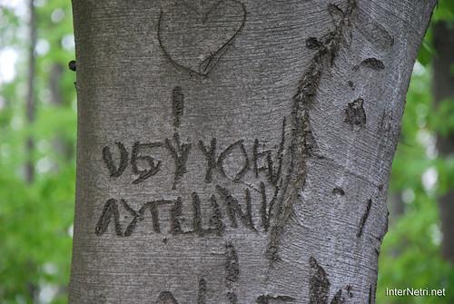 Ботанічний сад імені Гришка Буковий гай InterNetri  Ukraine 102