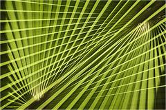 .... (NsSuR_Potsdam) Tags: natur palmen doppelbelichtung abstrakt nssur nikond700 linien