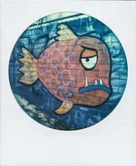 Goldfish bowl (fedupwithdigital) Tags: polaroid roidweek roidweek2018 impossibleproject edinburgh grafitti roundframe leith