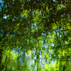 Trees In Water 126 (noahbw) Tags: captaindanielwrightwoods d5000 desplainesriver dof nikon abstract blur branches depthoffield distortion forest landscape leaves light natural noahbw reflection river shadow spring square sunlight trees water woods treesinwater
