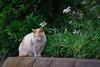 K_1_2898.jpg (akahigeg) Tags: 猫
