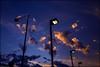 the lanterns (niggyl (catching up)) Tags: hobart hobarttasmania tasmania sky sunset sundown cloudsstormssunsetssunrises cloudporn cloud cloudformations cloudscape fujifilm fujinon fujifilmx70 x70 cumulus