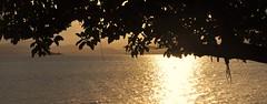 hidden (Ruby Ferreira ®) Tags: branches beach praia southofbrazil silhuetas silhouettes sunset pôrdosol ripples mountains montanhas golden cacupésc