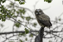 """_DEF3715 (1280x853) (""""Hass"""" to """"Digital"""") Tags: owl bean bag canon 300mmf28 14extender"""