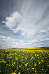 Clouds over Rapeseed (aveyardphotography) Tags: clouds rapeseed yellow blue farming rural flowerspetals yorkshire north portrait canon sky skies canola