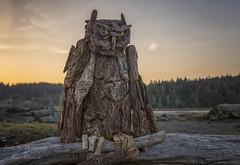 Great Horned Owl - Driftwood Art - Esquimalt Lagoon  Vancouver Island, BC (Freshairphotography) Tags: greathornedowl greatervictoria esquimalt esquimaltlagoon driftwood driftwoodart eveninglight colwood vancouverisland explorevancouverisland naturesart beach