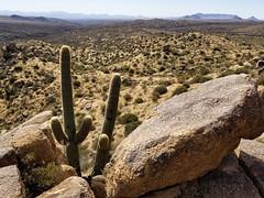 above the centurians (Michael Kenan) Tags: desert rocks cactus sonoran sky clouds sahuaro saguaro az arizona west old sears kay ruins arid 48th state photography