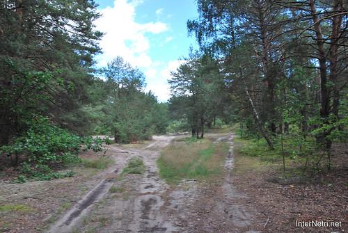 Волинський ліс Лісова дорога InterNetri Ukraine 0186137053