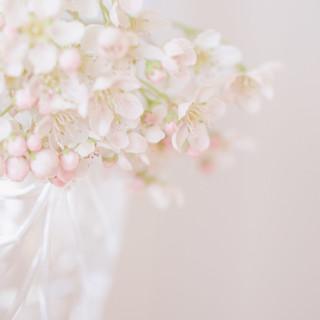 Sorbus Cashmiriana Blossom