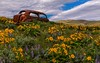 Long term parking with a view (Cole Chase Photography) Tags: rustycar abandoned spring flowers balsamrootsunflowers lupine washington columbiahillsstatepark dallesmountainranch rust pacificnorthwest