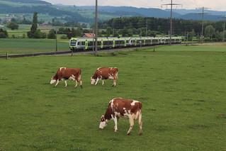 BLS Lötschbergbahn Lötschberger RABe 535 unterwegs zwischen Gümligen und Rubigen bei Bern im Kanton Bern der Schweiz