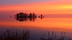 An Early Effort (Kevin Benedict Photography) Tags: lakemattamuskeet northcarolina nationalwildliferefuge nikon landscape sunrise morning reflections cypress beautiful water trees easterncarolina photobenedict mattamuskeet travel dawn serene sky nature winter downeast outeast outerbanks englehard newholland fairfield easternflyway light colorful causeway reflection calm lake