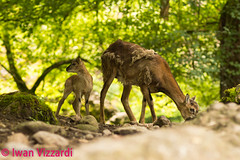 Tierpark Goldau (5 von 6) (1973RoadRunner) Tags: natur nature tiere animals tierpark goldau