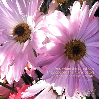 114/365 - Daily Haiku: Sunshine