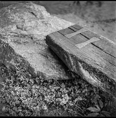 old wooden bench, stone, ground cover, French Broad River Park, Asheville, North Carolina, Ricohflex DiaM, Arista.Edu 200, Ilford Ilfosol 3 developer, early April 2018 (steve aimone) Tags: bench wooden stone groundcover frenchbroadriverpark asheville northcarolina ricoh ricohflex ricohflexdiam aristaedu200 ilfordilfosol3developer tlr twinlensreflex 120 film 120film mediumformat monochrome monochromatic blackandwhite squareformat 6x6