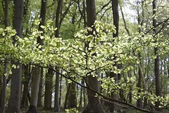 Sunshine in the woods #1 (MJ Harbey) Tags: wood forest tree ashridgeestate nationaltrust hertfordshire nikon d3300 nikond3300 sunlight ringshall