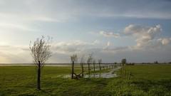 Spring road (pszcz9) Tags: polska poland przyroda nature natura ujściewarty wartamouth łąka meadow mokradła wetlands pejzaż landscape beautifulearth sony a77 droga road drzewo tree zachódsłońca sunset