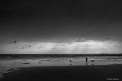 Dicha (AvideCai) Tags: avidecai bn blancoynegro paisaje playa cádiz canon1635 agua mar
