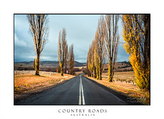Country road in Autumn (sugarbellaleah) Tags: cloud road highway country countryside travel transport trees deciduous poplars fall leaves roadtrip wintry weather cold chilly remote rural farmlands australia golden yellow