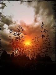 weeds (eigi11) Tags: weeds hss gras sonne wolken clouds colors