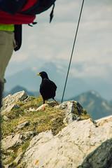 IMG_3246-25 (niggow) Tags: hiking wandern wanderung germany bavaria bayern deutschland österreich alps sonnwendjoch ht sonndwendjoch hinteres photoshop photography photographer photo photoshoot photographie wanderlust take more adventures ausflug mountains berge alpen bayrische