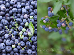 blueberry (Cintamani, GreenMorning.pl) Tags: berry blue garden