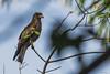 AQUILA    ----     EAGLE (Ezio Donati is ) Tags: uccelli birds animali animals natura nature alberi trees fiori flowers africa costadavorio areayamoussoukro
