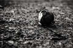Game over (tamnitok) Tags: outdoors toy mankind childhood brokentoy abandoned solitude minimal light shadow blackandwhite monochrome greyscale