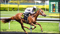Cozze Kid - May 4, 2018 Maiden Special Weight @ Golden Gate Fields (billypoonphotos) Tags: tapeta golden gate fields berkeley jockey horse racing thoroughbred dirt track photo picture photography photographer billypoon billypoonphotos nikon d5500 18140mm nikkor news stretch win finish synthetic race 18140 mm sign sport stadium building grass people road cozze kid shanghai chestnut filly 2018 gomez alejandro tree