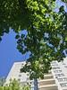 Warm💙💚 #warm #trees #sky #green #blue #greentrees #bluesky #life #lifestyle #aesthetic (lena.erica.iva) Tags: warm trees sky green blue greentrees bluesky life lifestyle aesthetic