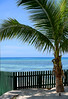 Likkle Green Fence (Poocher7) Tags: palmtree sand shadows greenfence beach water ocean caribbeansea jamaica westindies caribbean sundaylights