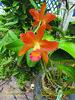 Orquidea (Janos Graber) Tags: orquídea flor planta vegetal jardimbotânicodoriodejaneiro jardimbotânico riodejaneiro
