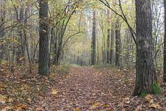 Alleyway (Ievinya) Tags: autumn fall rudens pathway alley aleja leaves trees koki leafs way ceļš stopiņi stopini