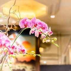 Welcome to Kowloon Shangri-La - Hongkong 134/188 (*Capture the Moment*) Tags: 2017 blume hongkong hotel lobby nacht nachtaufnahmen night nightshot orchideen orchids sonya7m2 sonya7mii sonya7mark2 sonya7ii sonyfe2470mmf4zaoss sonyilce7m2