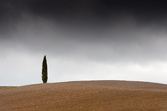 Lonely cypress (SLpixeLS) Tags: italy italie tuscany toscane toscana sanquiricodorcia landscape paysage soil agriculture design art minimal minimalism tree arbre cypress cyprès sky ciel cloud cloudy nuage nuageux platinumheartaward