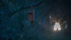 shelter (Alta Alteo) Tags: vogelhaus dunkel licht garten park unterschlupf sonnenuntergang