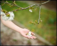Spring (.BenShootsFilms.) Tags: 24 pentax67 p67 6x7 takumar 120 film bokeh