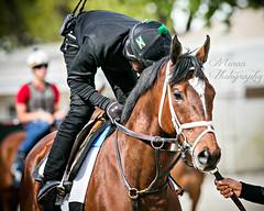 Pletcher Trainee (EASY GOER) Tags: horseracing horses horse thoroughbred belmontpark equine