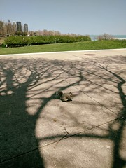 Rest (ancientlives) Tags: chicago illinois il museumcampus fieldmuseum chicagoparks usa walking squirrels nature landscape lakemichigan lake bluesky weather warm sunshine shadows city downtown cityscape may 2018 monday spring