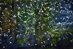 Crawton Bay - Stonehaven Aberdeenshire Scotland - 8/5/2018 (DanoAberdeen) Tags: danoaberdeen candid amateur 2018 crawton scotland scottish scotch cloudporn aberdeenshire stonehaven scenery coastline autumn summer winter spring visitaberdeen visitscotland abdn uk gb seashore cliffs hills walks countryside woods forest water wasser escotia scotia ecosse preservation conservation freshair historicscotland fowlsheugh seascape northsea northeast beach playa plage walk hiking ramblers