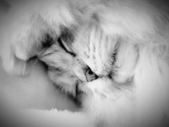 (❀Lily of the Valley❀) Tags: cat animal fun sweet love portrait katze tiere haustiere