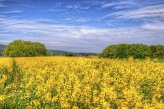 Colours of awakening by blavandmaster - A warm Spring day around Rödinghausen, Ostwestfalen, Germany