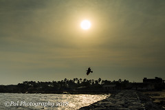 The sun is going to call it a day@Vembar Beach (ppaulvadivu) Tags: paulvadivu india vembar fishing boat canoneos70d canonef2470 gulf mannar seascape lighthouse jetty