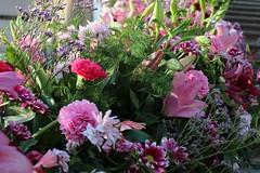 Pink, pink and Pink (Giulia ~) Tags: newcamera canon day natura nature green giardino fiori rose rosa garden flowers pink