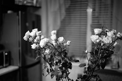 rose (grovere_g) Tags: leica leicam blackandwhite bnw